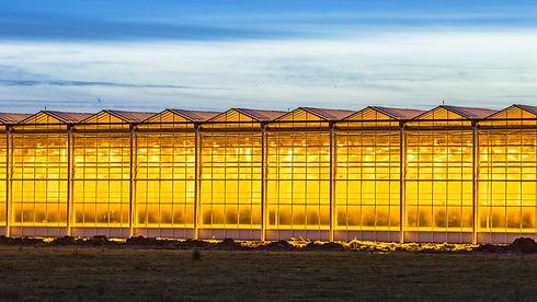 illuminated-industrial-greenhouse-crop-Y