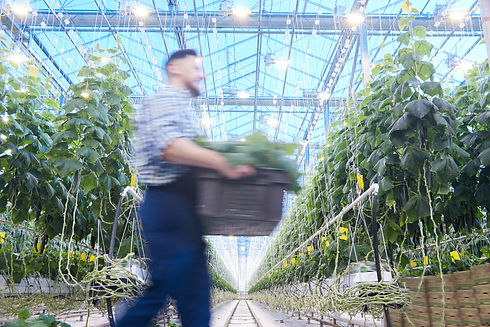 modern-cucumber-plantation-H5V3G8R.jpg