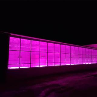 grow-lights.jpg