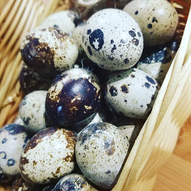 Delicious Quail Eggs _#gastronomic #lovefood #quail #egg #chefjamesmitchell