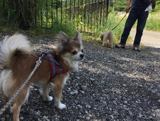 ドッグトレーナー同士のお散歩会