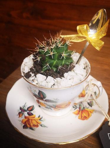 Cuptus ( Cactus in a teacup)