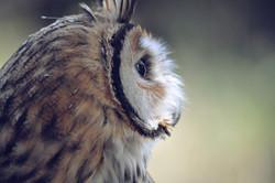 owl-690080_1280