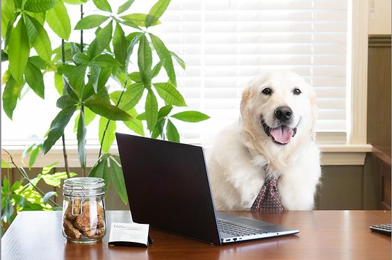 LifePlan-Financial-Inc-office-dog.png