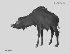 Catoblepas (Mythical Creature)