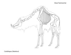 Catoblepas (Skeleton)