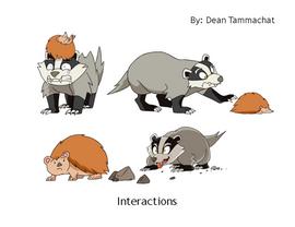 Hedgehog/Badger Interaction