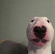Sucker Dog.jpg