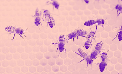 Bees%20at%20Work_edited.jpg