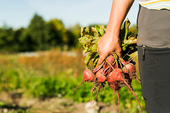 mid-section-of-woman-holding-beetroots-5