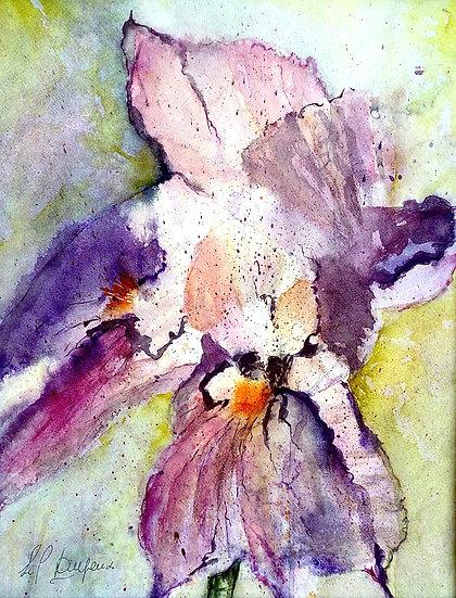 Iris#2