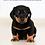 Thumbnail: Le bien être animal