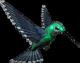 humming bird.png