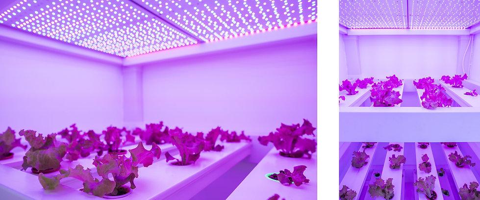 futurfarm-grow-lights.jpg