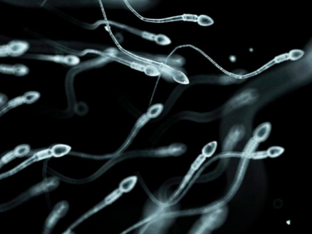Can you change your sperm by changing your diet?