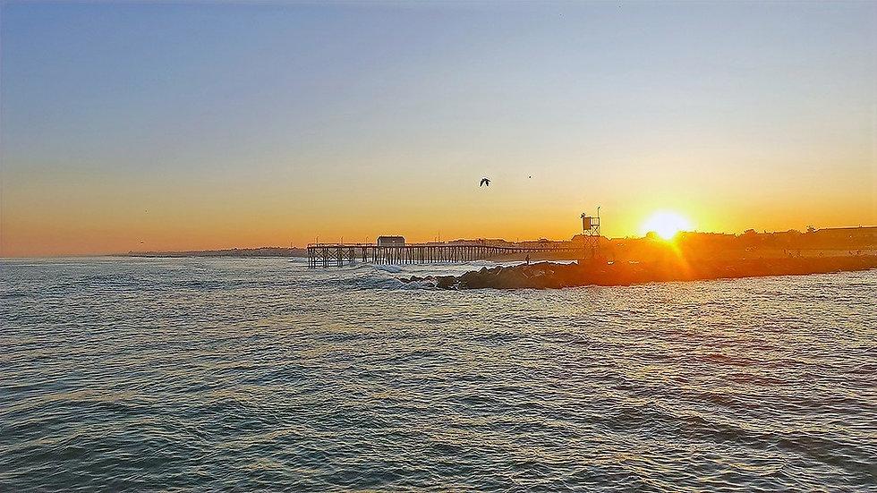 Shore-Whale-Watch-Sunset-Cruise-8754b.webp
