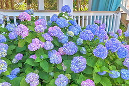 Blue Hydrangea House | Belmar NJ Vacation Rentals