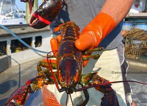 Fresh Catch With The Jersey Shore Lobster Brothers
