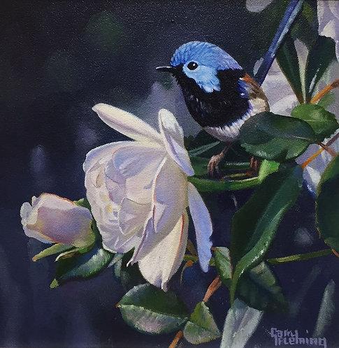 Wren and white rose