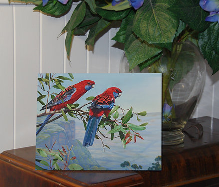 Crimson view- Crimson rosellas shimmer board