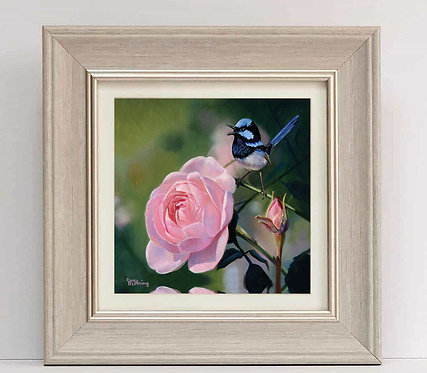 Blue wren and lilac rose