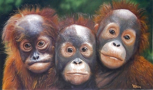 hopeful trio-Baby Orangutans