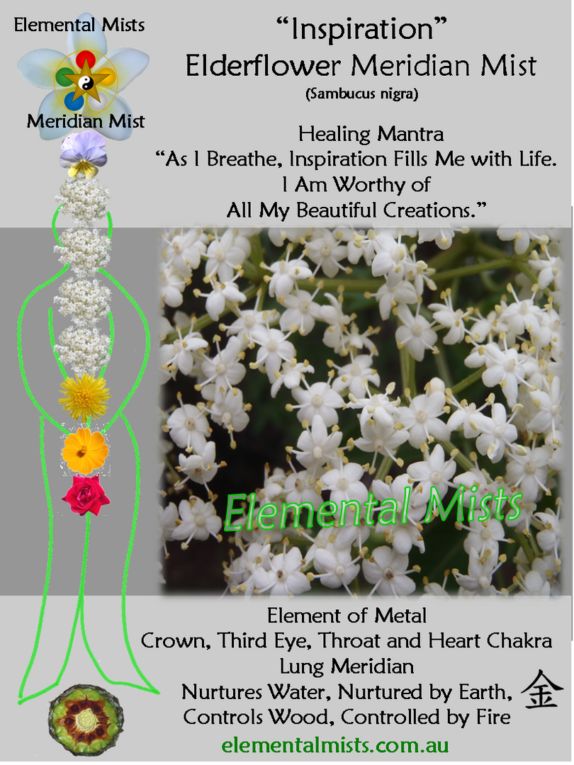 Inspiration - Elderflower
