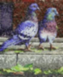 city pigeons flying rats, mosaic, bachor