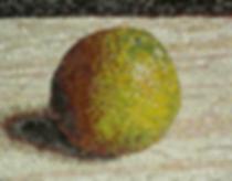 single orange, mosaic, bachor