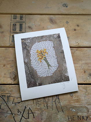 Daffodil signed print