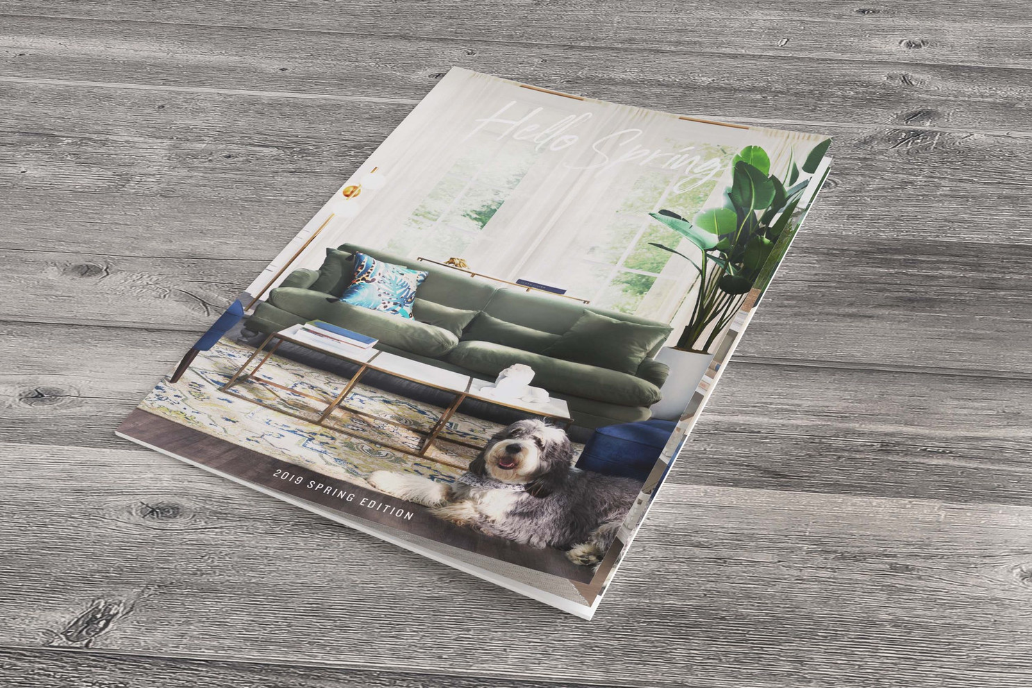 ASI/VCF Spring Lookbook Cover