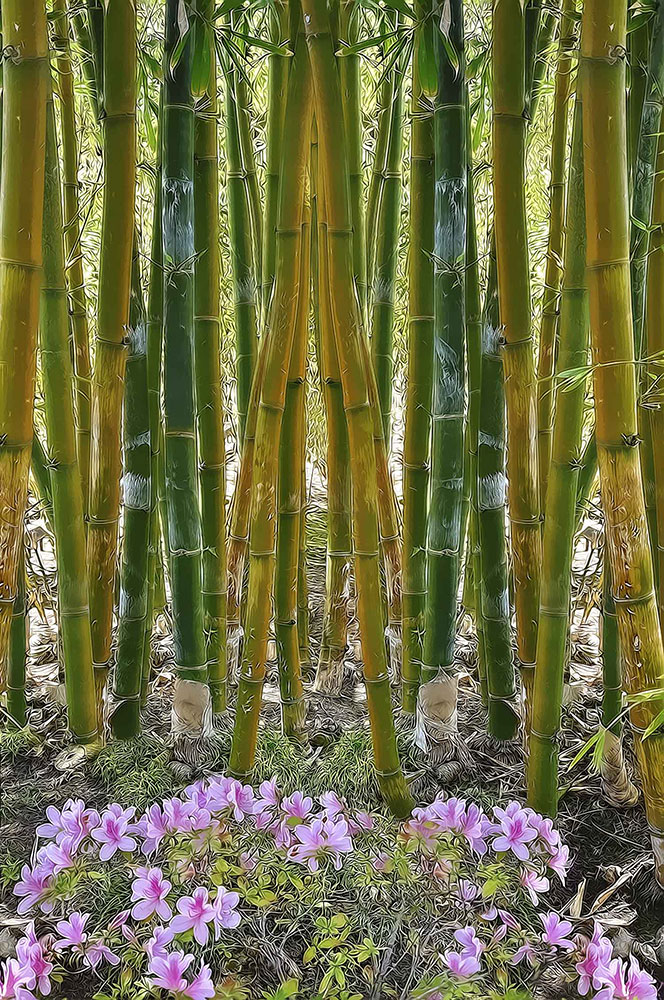 W2-Bamboo-forest-after.jpg