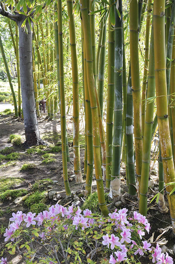 W2-Bamboo-forest-before.jpg