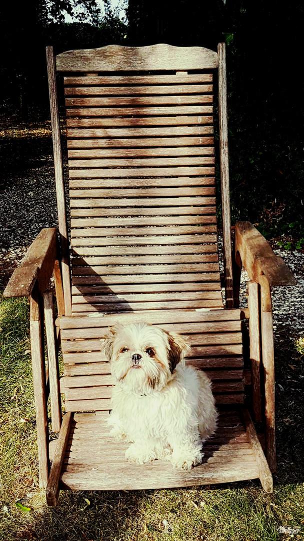 Mishka Sunbathing