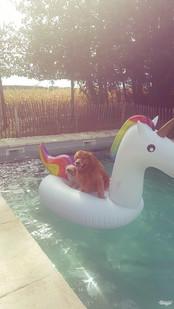 Ginger and Mishka enjoying the pool