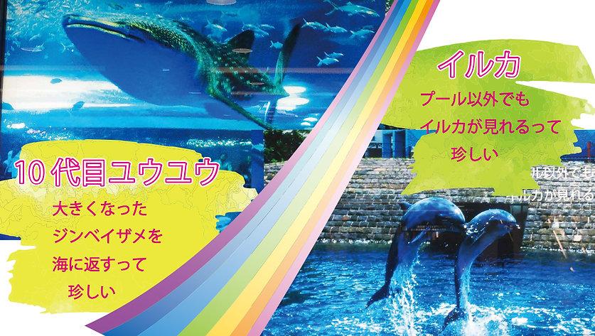KagoshimaAquarium2.jpg