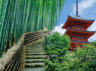 京都フェスティバル