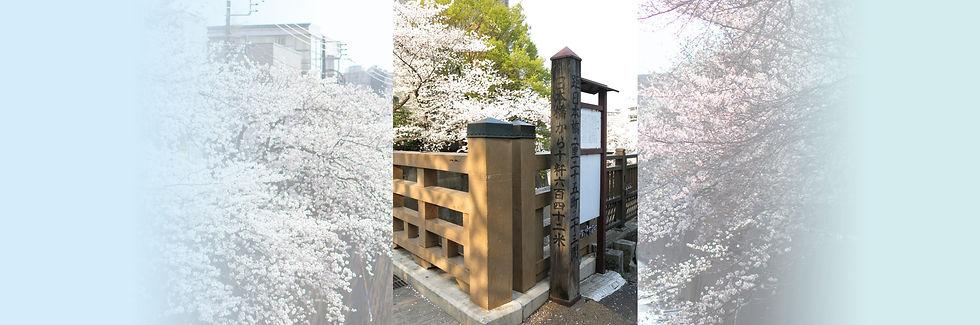 pixta_桜のコピー.jpg