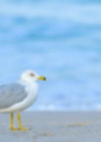 Photo of seagull walking on beach