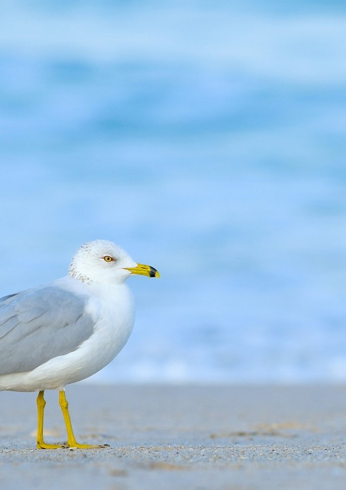 Photo of seagull walking on beach
