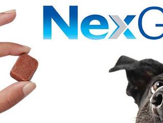 Nexgard-Not Just Flea Medication