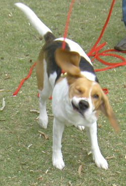 dog training basic and puppy first class 078.JPG