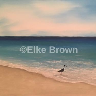 Bird on Shell Island