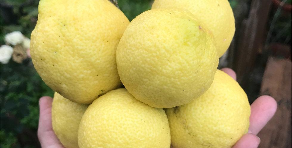Limon (1 kg)