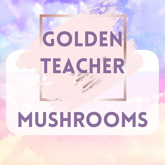 GOLDEN TEACHER 1 OZ ORGANIC DRIED MUSHROOMS