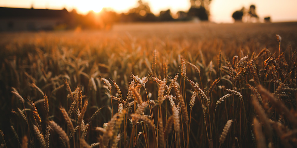 USDA Rural Development Program