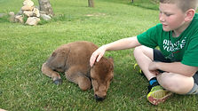 Harrison and Baby Buffalo_.jpg