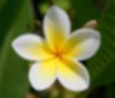 Massage Balinais Rouen