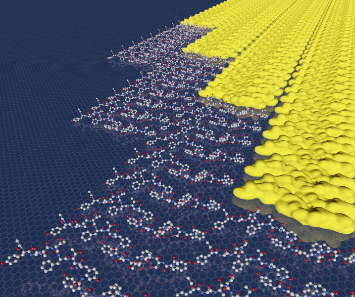 The peptides in this highly ordered two-dimensional array avoid the expected nucleation barrier by assembling in a row-by-row fashion. @ PNNL