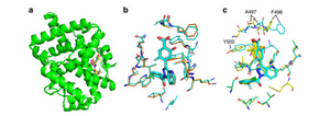 Co-crystal structure of RORγt with MRL-871, MRL-299, MRL-367 and MRL-673
